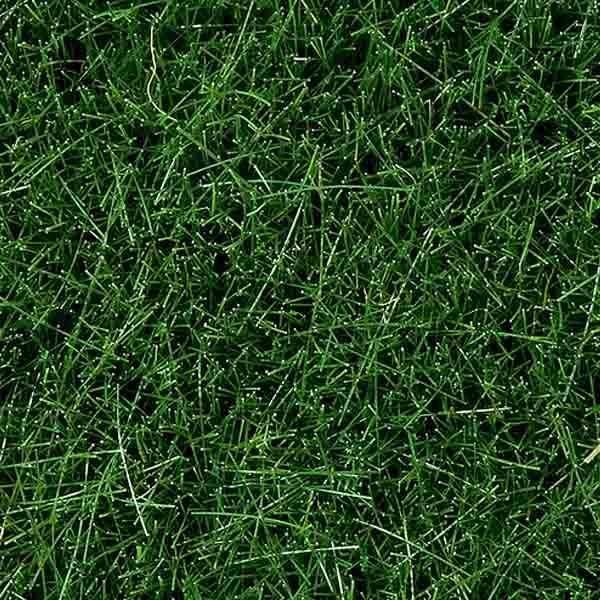 wild grass texture. Wild Grass, 6 Mm, Dark Green, 50 G Bag Wild Grass Texture O