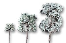 Laubbäume geätzt pastellgrün