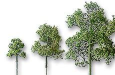 Laubbäume geätzt hellgrün