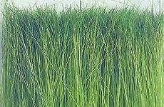 Modellgräser