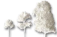 Laubbäume geätzt weiß
