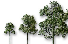 Laubbäume geätzt naturgrün