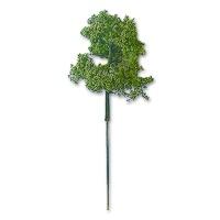 Laubbaum hellgrün 30 mm