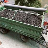 Oilseed Grains 150 g