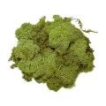Iceland Moss light green, 50 g bag