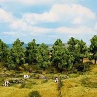Laubbäume Sommer 100-140 mm