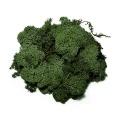 Iceland Moss dark green, 50 g bag